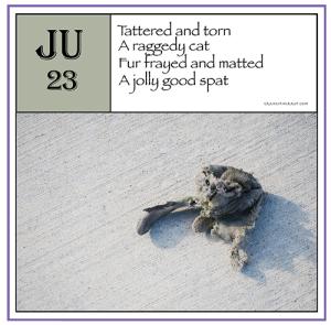 ppJune23rd-harrop